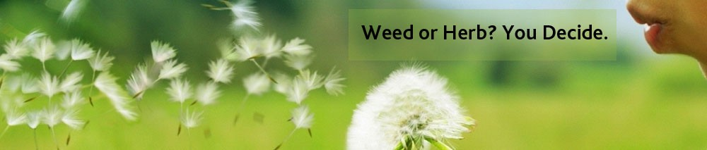 Banner-weed-or-herb-You-decide